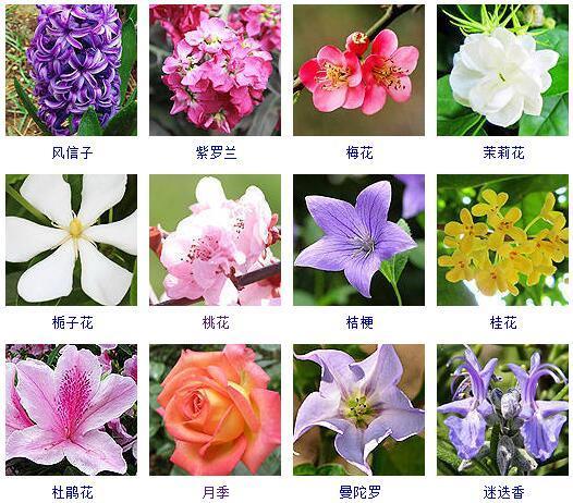 花卉大全,这里有500种花卉等你来认领!很多人都收起来当宝典啦!