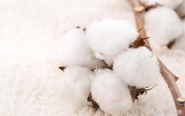解梦棉花,棉花,对你来说到底意味着什么?