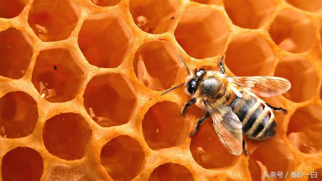 蜂蜜品种,最全的蜂蜜介绍都在这里,看你认识几种?看完你就不敢随便买了