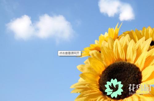 太阳花寓意,太阳花有哪些花语?