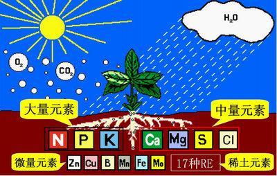 植物的条件,作物正常生长发育所需的必需营养元素都有哪些?