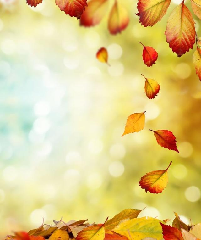 秋风的句子,深秋,那些温暖我们的句子