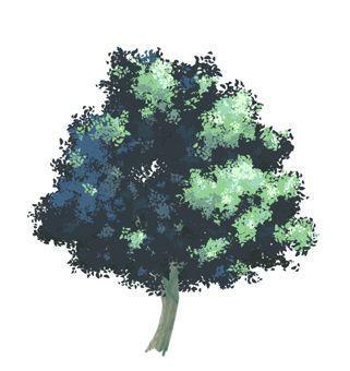 """漫画的树,「教程」日漫里""""树""""的是怎么画的?"""