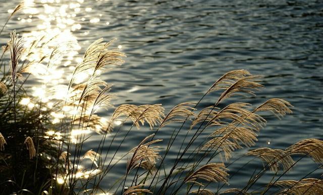 帆的诗,七律诗一首/江楼赋怀:点点落帆生野火,声声去浪伴江流