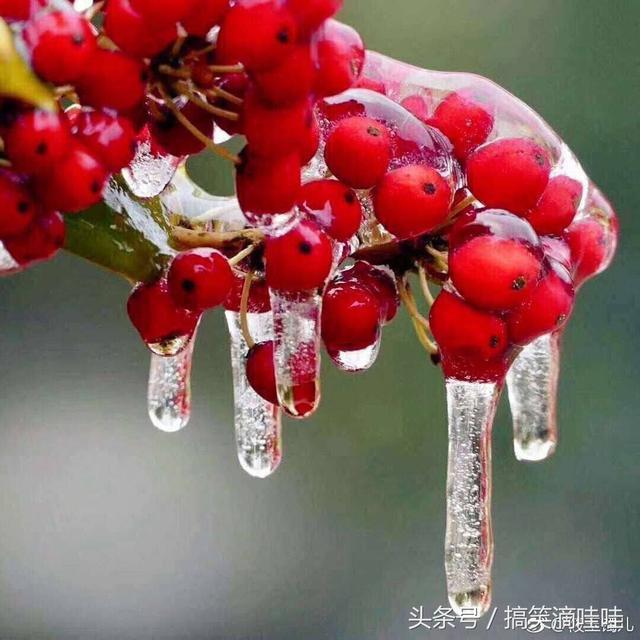 下雪幽默句子,爆笑诗句,送给南方大雪里的你