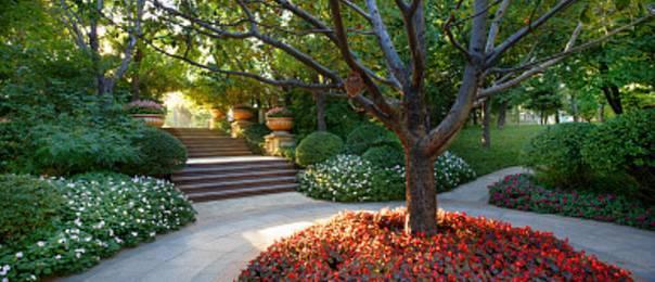树的知识,是时候充电啦!园林设计需要用到的景观树知识大全
