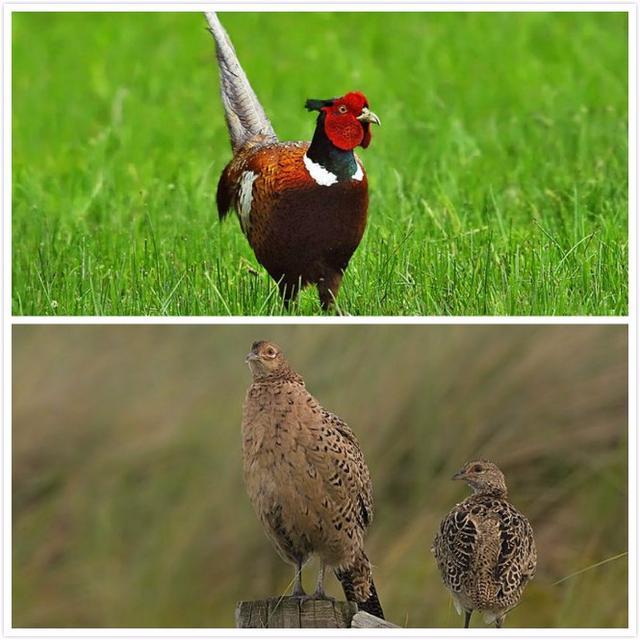 喙怎么读,这些鸟的名字你都能念对吗?