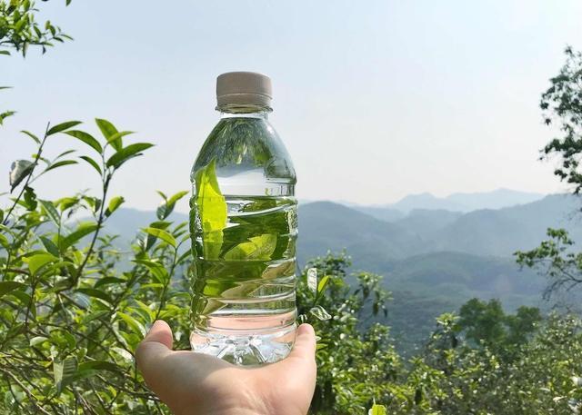 茶树品种,茶树的种类不是茶哦,你知道有哪几种吗?还有其他的茶叶知识哦