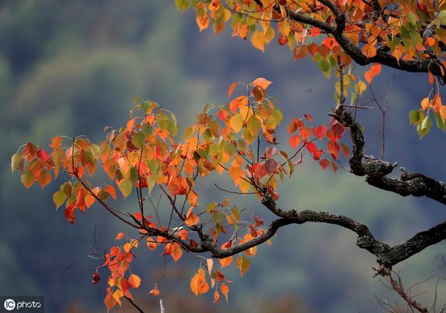 关于秋天的诗,十首关于秋天的诗词,醉美了整个秋天