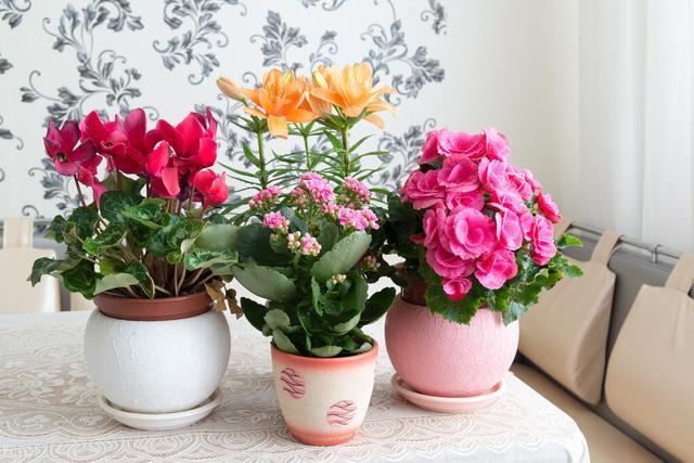 夏天开的花有哪些,101种室内常见盆栽花卉,治愈又减压,一起养起来!