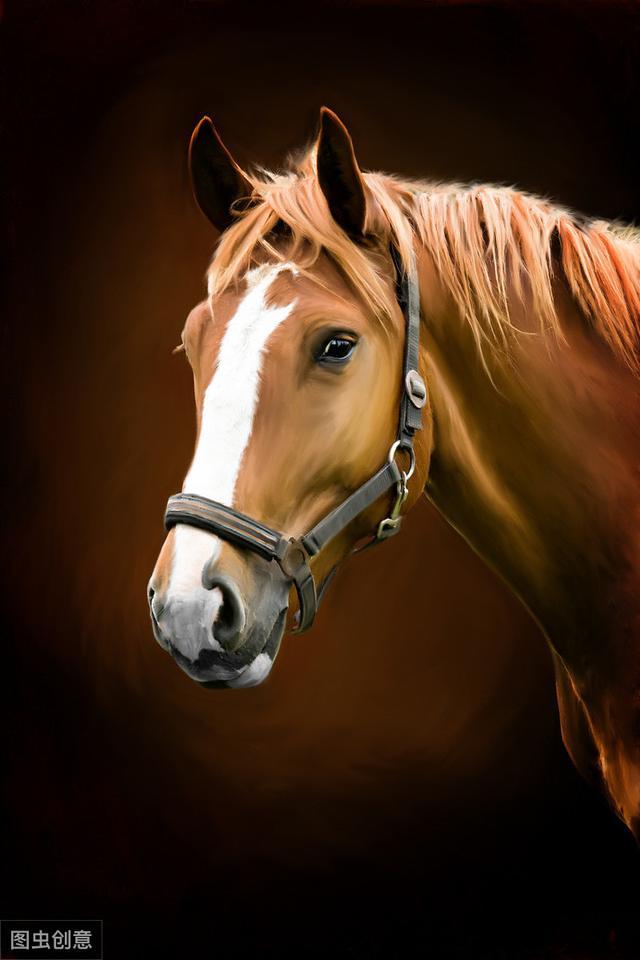 马字开头的成语,那些马的联想与故事之一,寻找人们心中马的情结