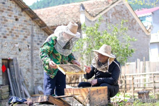 """蜂虫的吃法,蜜蜂有种病叫""""花子"""",幼虫不封盖还发臭,养蜂人如何治疗呢"""