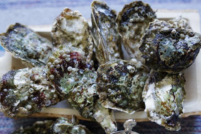生蚝图片,常见海鲜——牡蛎