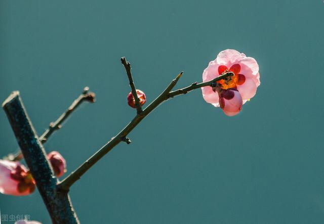"""十五的诗,时光过隙赛飞轮,九九消寒又一春。""""数九""""的百科全诗25首"""
