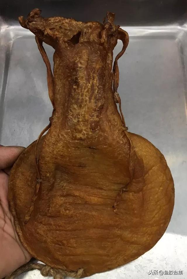 胶的品种,最新最细的鱼胶大全(一)