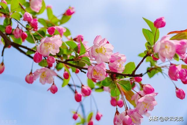 海棠的诗,关于海棠的诗句25首
