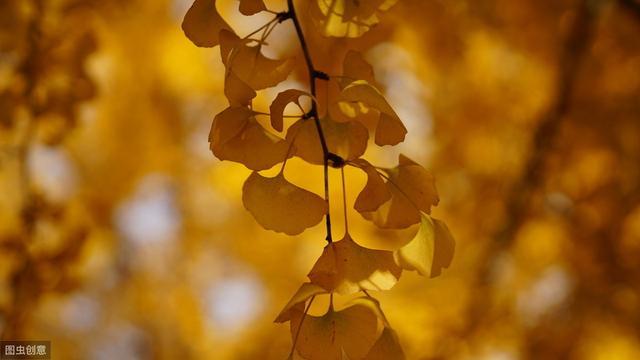 描写秋天的好词好句,描写秋天的好词好句(一)