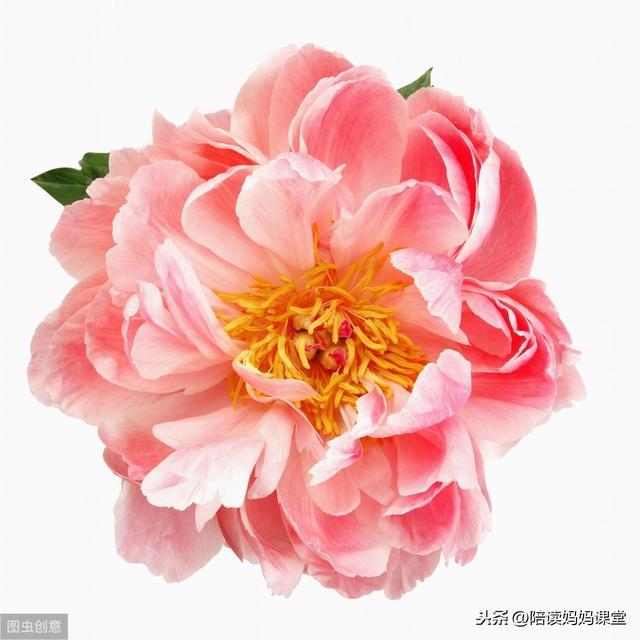 """写菊花的句子,诗词中描写""""花""""的45个好句子,摘抄学习"""