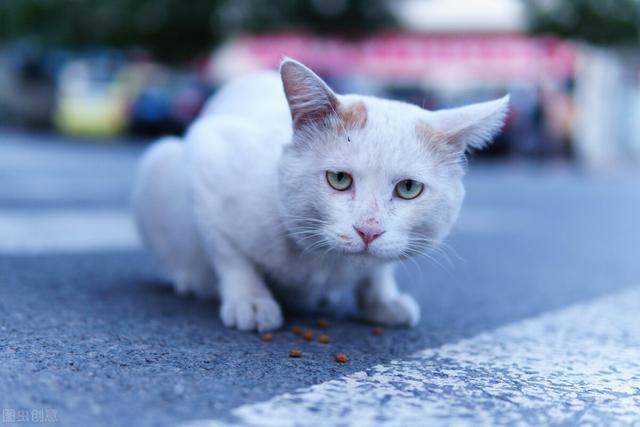 小猫的好句,致:流浪猫咪的天使