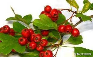 红花的吃法,脸色苍白肤色差 明星都在吃的药膳帮你美容养颜
