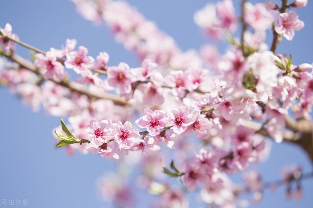 """蜂蜜品种,内行人都知道这8种""""花""""蜜不存在,别再花大价钱买假蜜了"""