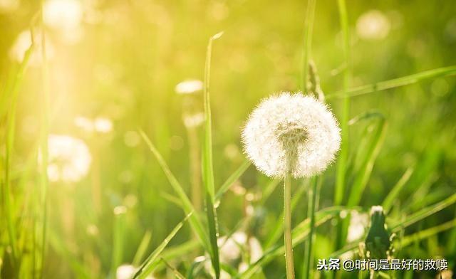 敬的句子,敬昨天,我心无悔;敬今天,我心依旧;敬明天,我心不慌!