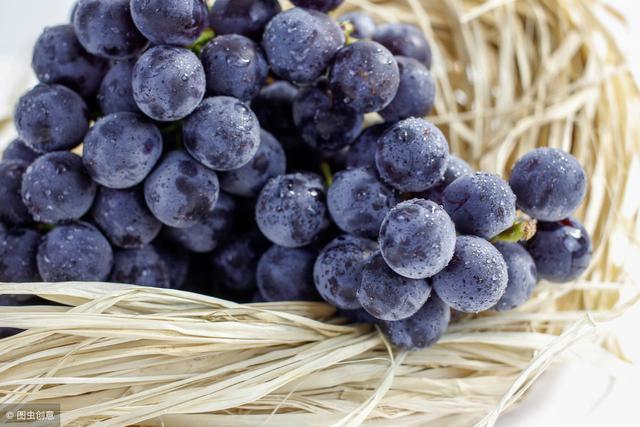 早熟葡萄品种,早熟葡萄苗品种有哪些?