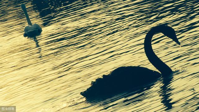 黑天鹅寓意,什么是黑天鹅事件