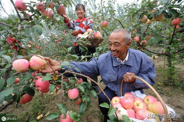 果树都有哪些?在这些地方栽种果树你将得不到收益,哪些地方?