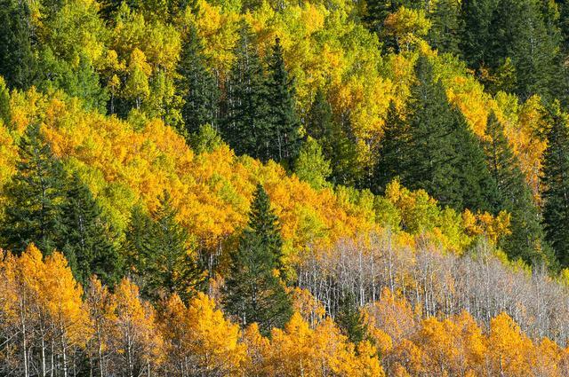 """描写秋天的诗有哪些,秋天来了""""漠漠秋云起,稍稍夜寒生""""3首初秋古诗,惊艳了岁月"""