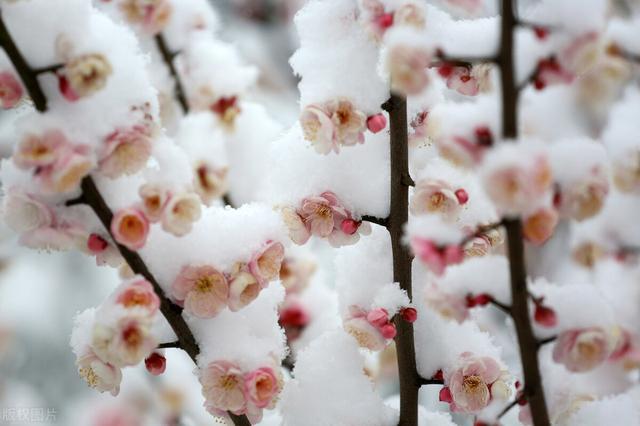 每逢佳节倍思亲的佳节是什么节日,柳眼梅腮,已觉春心动,冬至的前一天,杜甫写了一首快乐的乡愁诗