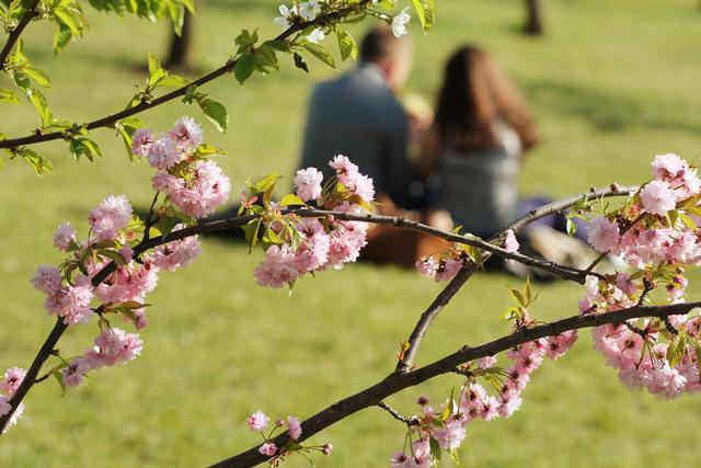 春天英语短句,实用亲子英语对话:春天来了,一起赏花和郊游
