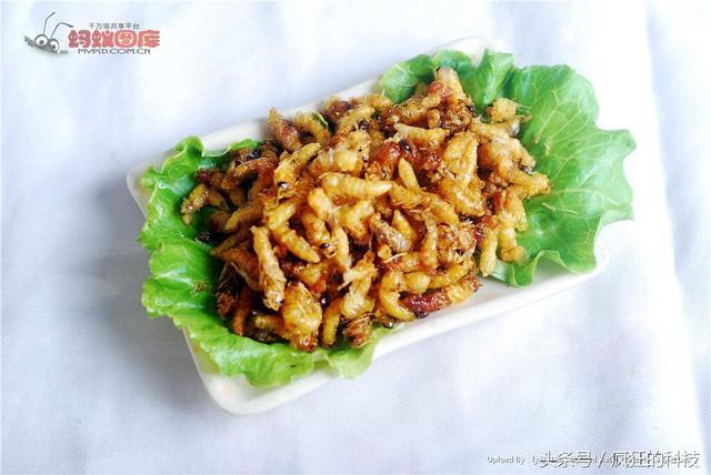 蜂虫的吃法,如果你喜欢吃蚕蛹,那么这道蜂蛹做的菜请你一定不要错过