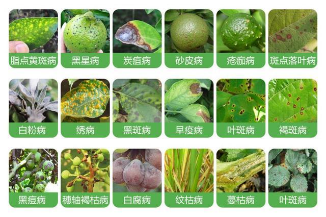 农药品种,这8种常见农药,能对付百种病虫害!你都了解吗?