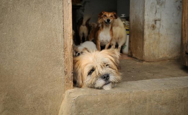 流浪狗的誕生,並非愛狗人士遺棄,它只是一個時代的犧牲品罷了 家有萌寵 第4张