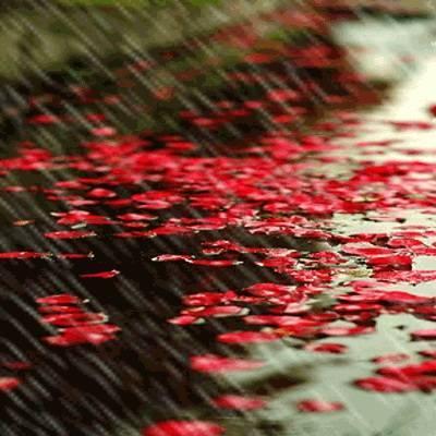 细雨的诗,关于雨的诗句(共94句)