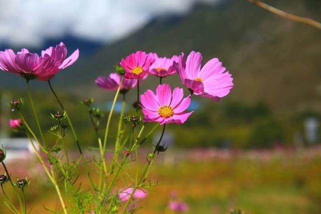 野花的短句,野花(外九首)