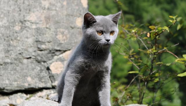 垃圾堆撿到一隻藍貓,細心照顧了一個月,病剛好,前主人來要貓了 家有萌寵 第6张
