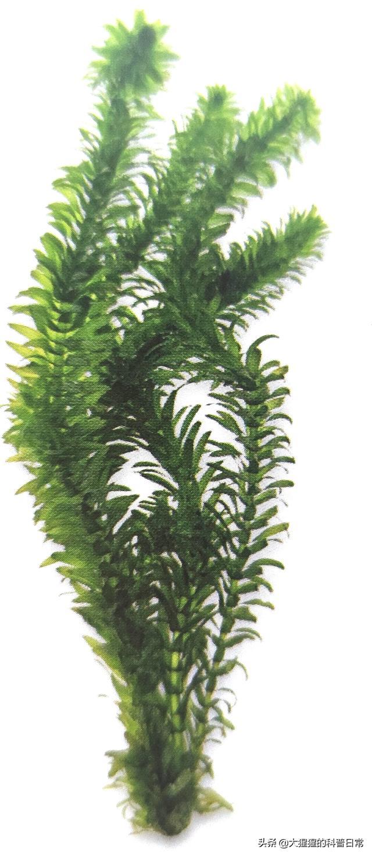 单子叶植物有哪些,有花植物——单子叶植物(二)