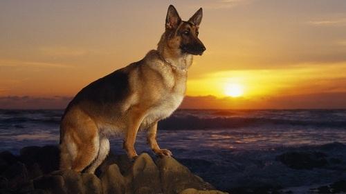 狗开头的成语,我是狗,十二生肖排行老十一,以下是我的介绍