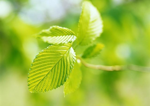 描写树叶的句子,树叶的一生:从青翠到枯黄再到飘落,我们是季节的使者