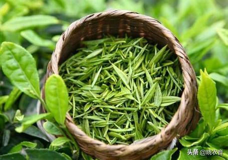 绿茶的品种有哪些,绿茶产地在哪里?有哪些绿茶品种?
