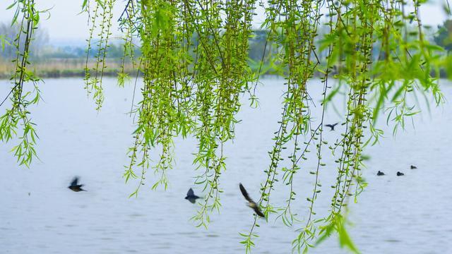 春分的诗,轻风细雨,惜花天气。读春分的古诗词,邂逅旧时春光