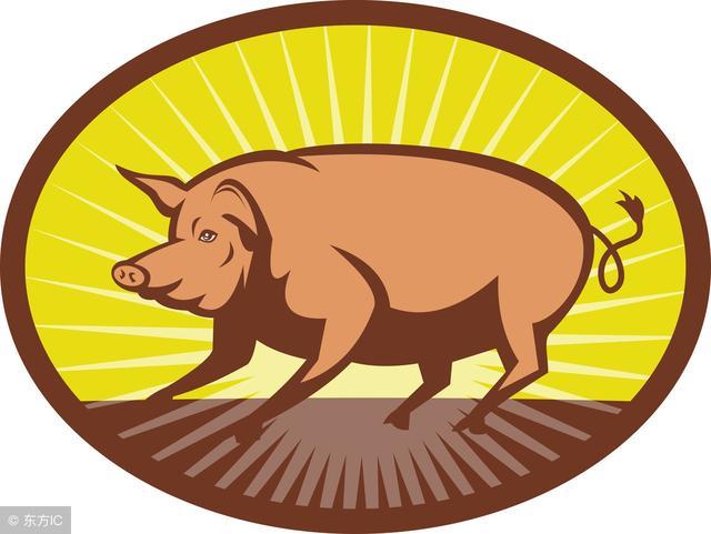 今年属猪财运,属猪人本周富贵逼人,赶紧起来接财运了!