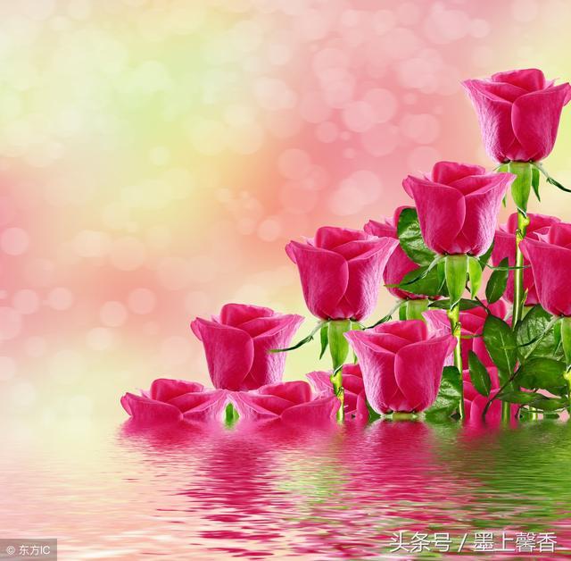 花束图片,绝美鲜花怒放「太美了,快分享给朋友吧!」