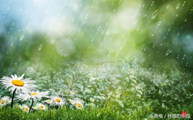 雨后的诗,最美的下雨天,记录在10首唐诗宋词里,流传千年,依然清新动人
