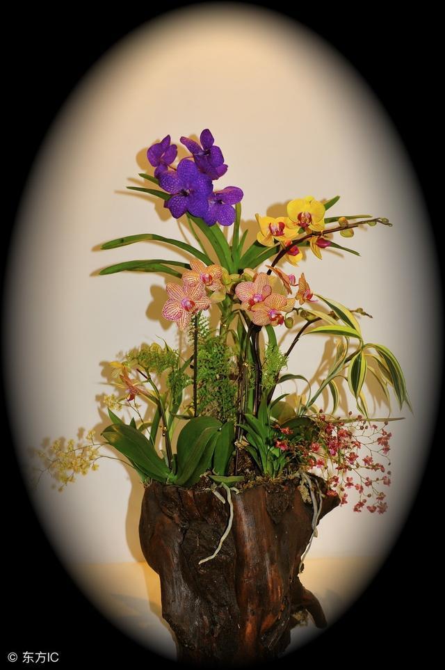 家庭养花,知识技巧(太好了,快分享给朋友吧!)