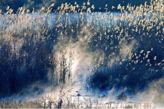 白鹭的诗,「诗词鉴赏」秋风起 芦花飞