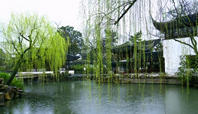 柳树的寓意,知苑新语 | 千丝垂柳江南岸