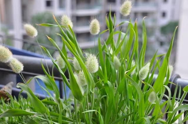 几种可爱毛茸茸的野生绿植,每一种都是小动物,还能净化空气